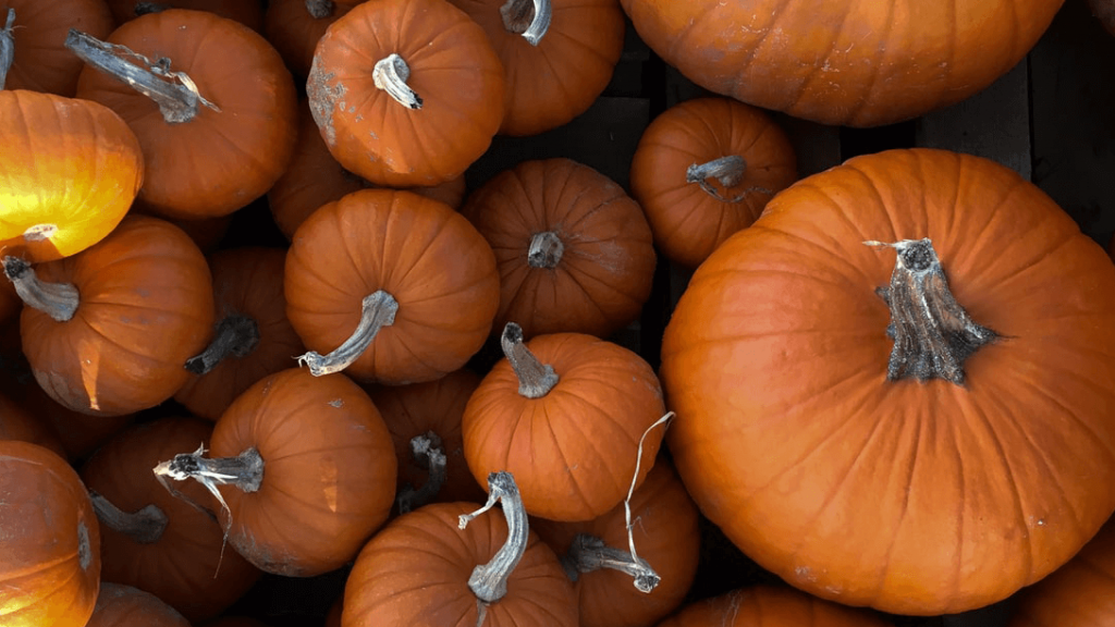 large and small pumpkins